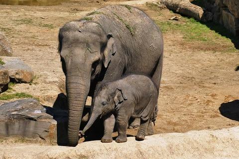 elephant-with-boy-3382579_640