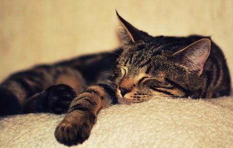 kitten-2874486_640