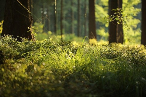 forest-floor-4700814_640