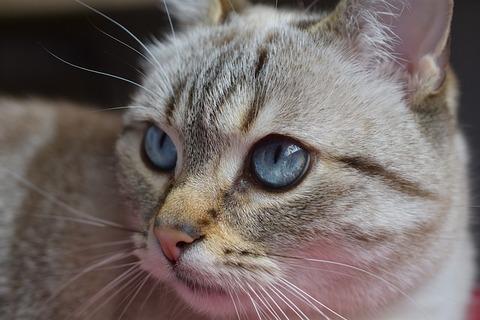 cat-4169550_640