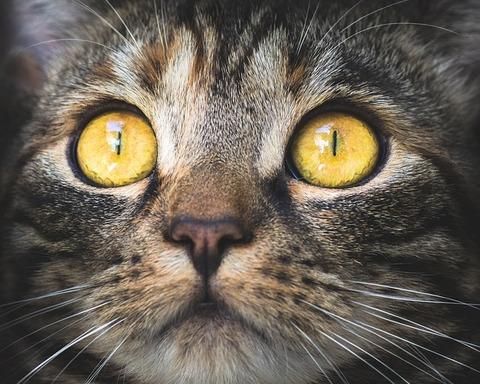 cat-3374422_640