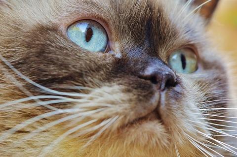 cat-1378201_640