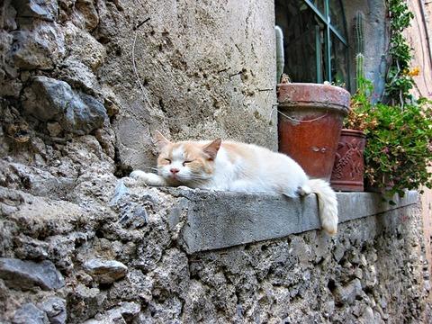 cat-3391592_640