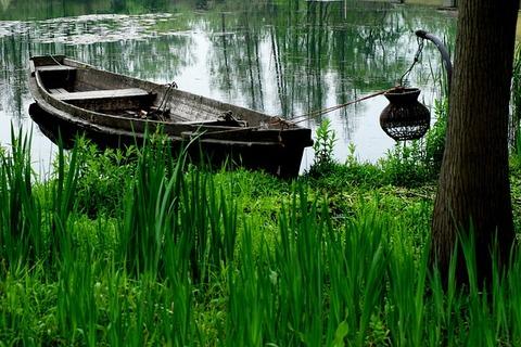 wetlands-1551833_640