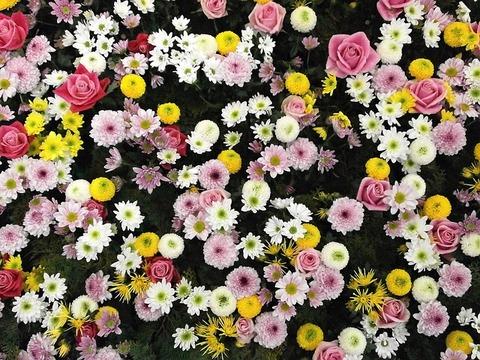flowers-80505_640