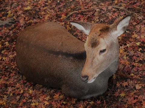 deer-1881176_640