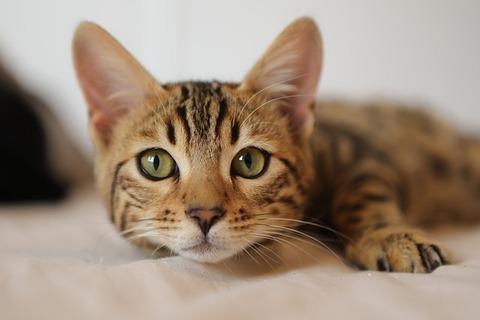 cat-4262034_640