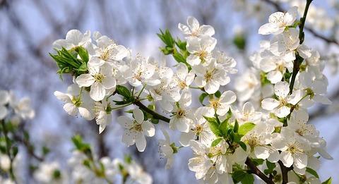 spring-flowers-714724_640