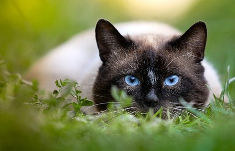 cat-2529563_640