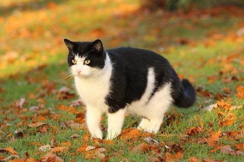 cat-744717_640