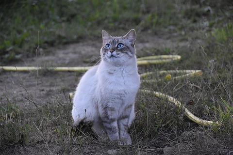 cat-4380875_640