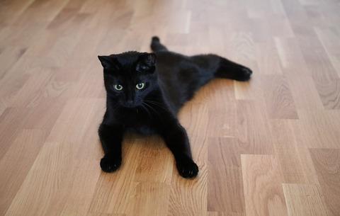 cat-2459087_640