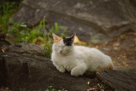 cat-4275851_640