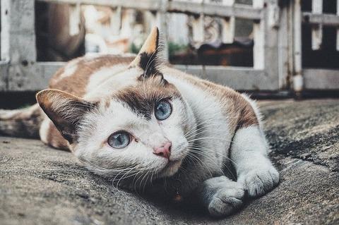 cat-1209067_640 (1)
