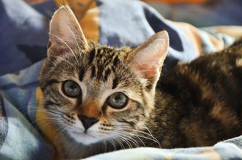 cat-3895177_640