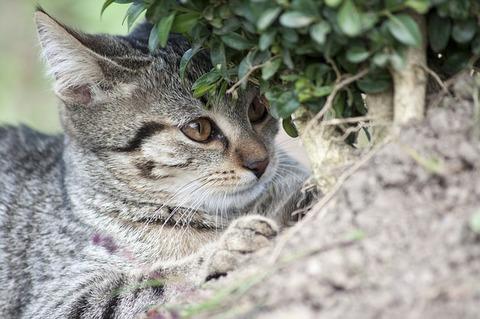 cat-2911419_640