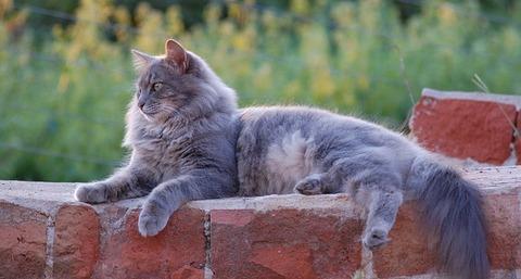 cat-367040_640
