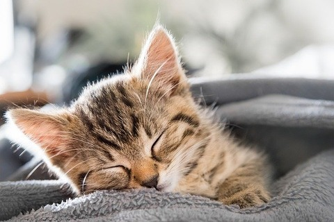 cat-5836282_640