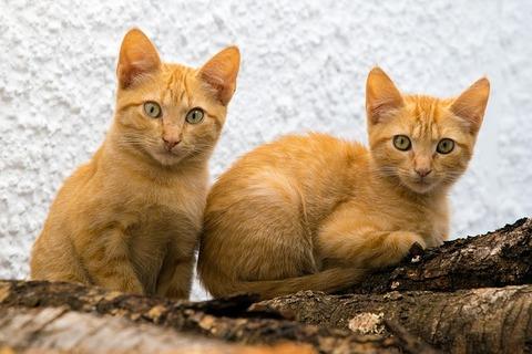 cats-3626690_640