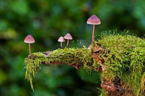 mushroom-2798150_640