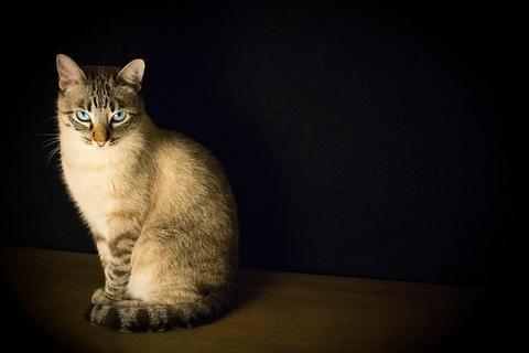 cat-2590467_640