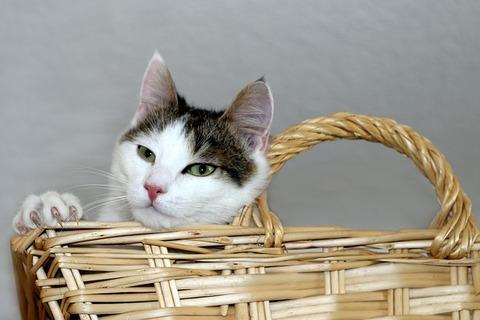 cat-3649415_640