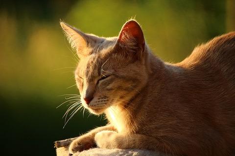 cat-1441264_640