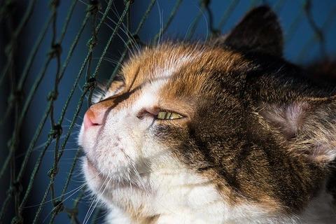 cat-4724231_640