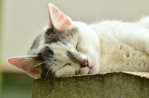 cat-1551794_640