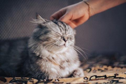 cat-5031733_640