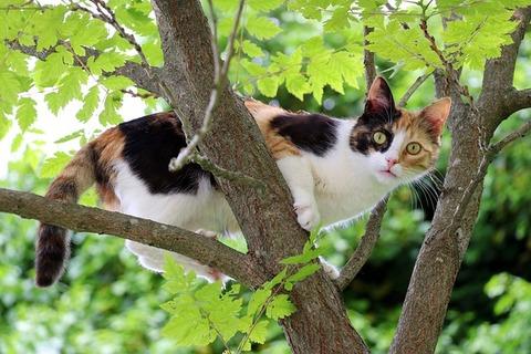 cat-2638033_640