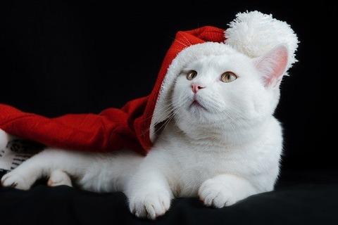 cat-5836297_640