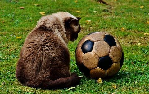 cat-2486446_640