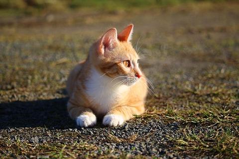 cat-1196260_640