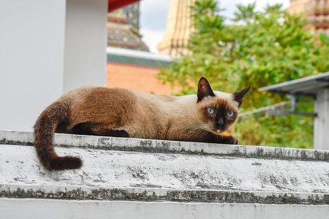 cat-3762311_640