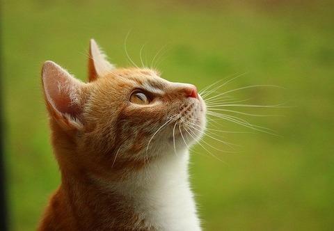 cat-1417278_640