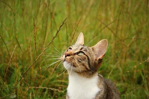 cat-1591631_640