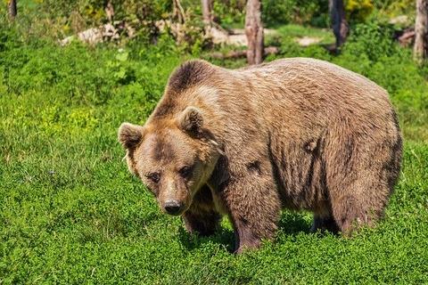 bear-422682_640