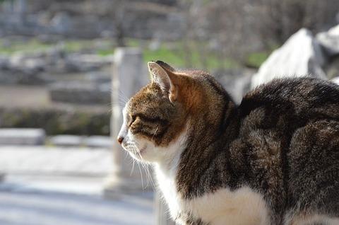 cat-5259516_640