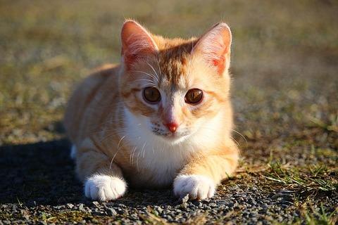 cat-1196267_640