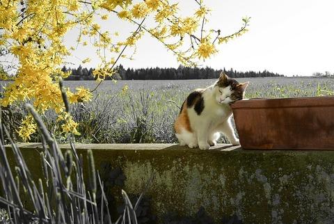 cat-2226499_640
