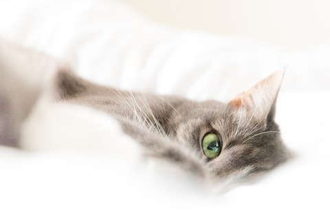 cat-4240964_640