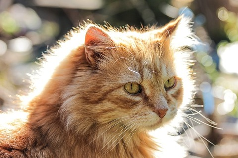 cat-1842092_640