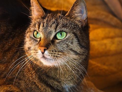 cat-1108002_640