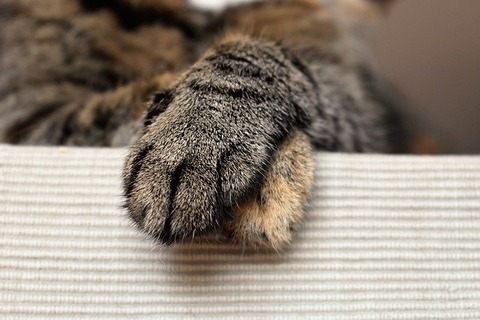 cats-paws-1693839_640