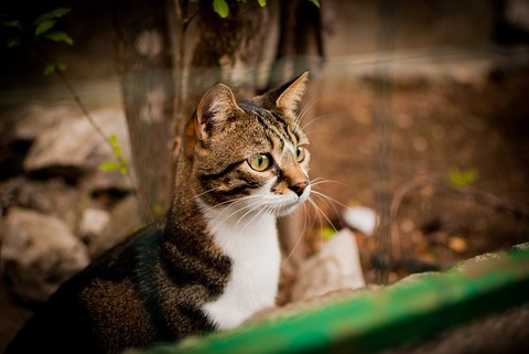 cat-2769879_640