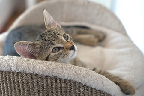 cat-4373562_640