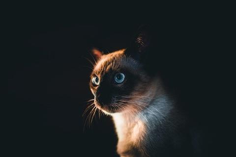 cat-5320568_640