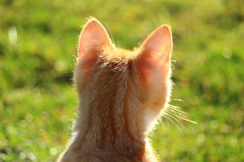 cat-1196246_640
