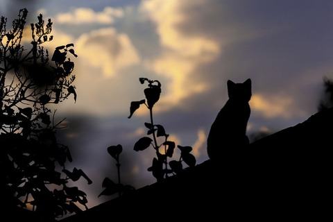 cat-1287438_640